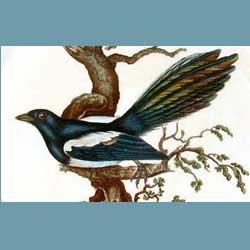 Portmeirion Birds Of Britain Magpie