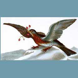 Portmeirion Birds Of Britain Fieldfare