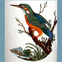 Portmeirion Birds Of Britain Kingfisher