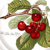 Portmeirion Pomona Late Duke Cherry