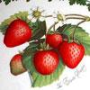 Portmeirion Pomona Elsanta Strawberry