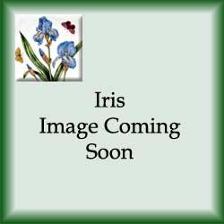 Iris New - Salad Plate