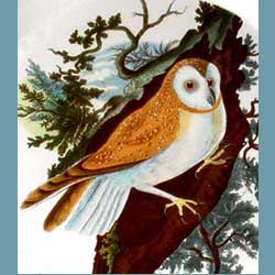 Portmeirion Birds Of Britain Barn Owl