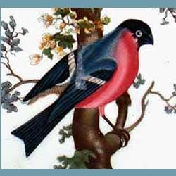 Portmeirion Birds Of Britain Bullfinch