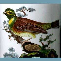 Portmeirion Birds Of Britain Cirl Bunting