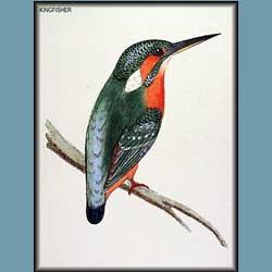Morris British Birds Kingfisher