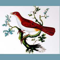 Portmeirion Birds Of Britain Nightingale