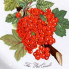 Portmeirion Pomona Red Currant
